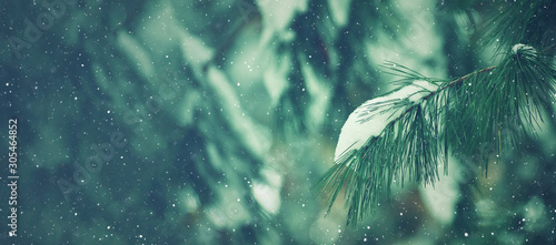 Poster Fleur Winter Season Outdoor Holiday Evergreen Christmas Tree Pine Branches Covered With Snow and Falling Snowflakes, Horizontal, Copy Space