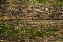 Old Boards Overgrown With Moss