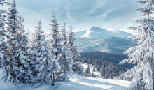 Majestic Carpathian Mountains ...