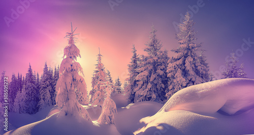 Foto auf Leinwand Landschaft Fantastic Winter landscape. Majestic sunset in the winter forest in alps. Sunlight sparkling in the snow. Scenic image of fairy-tale woodland in sunlit during Pink sunset. Christmas background