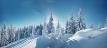 Winter Landscape Trees In Frost. Bright Winter Morning In Alpine Mountains With Snow Covered Fir Trees. Wonderful Mountain Scenery, Happy New Year Celebration Concept. Nature Landscape