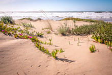View Over Dune Grass On The At...