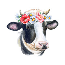 Cow Portrait With Flower Wreath, Crown Isolated On White Background. Watercolor. Template. Close-up. Illustration. Hand Drawing. Painting. Greeting Card Design. Clip Art.