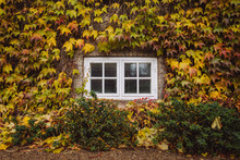 Window Of House In Autumn