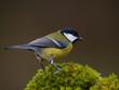 Aves en comedero