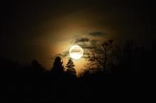 Full Moon Rises Through The Trees