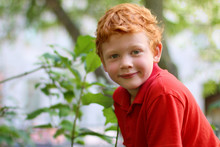 European Boy With Green Eyes Looking Directly At The Camera, Close-up. Funny Little Child With Curly Ginger Hair And Freckles Sitting On A Tree. Fashion Kid. Red Casual Shirt. Summer Weather