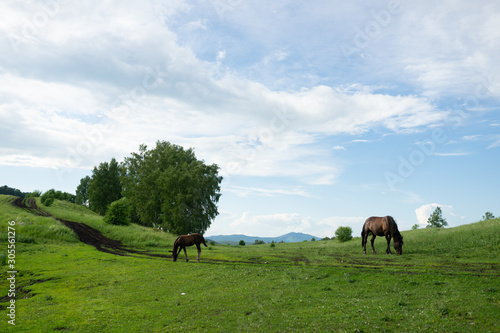 Photo Russian green hills and meadows in Altai