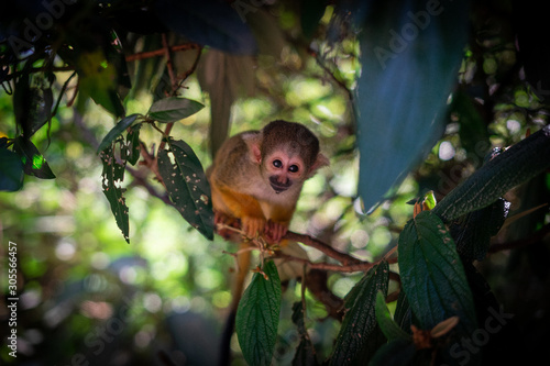 Photo  Little Monkey
