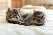 Cute Tabby Kitten Sleeping, Hu...