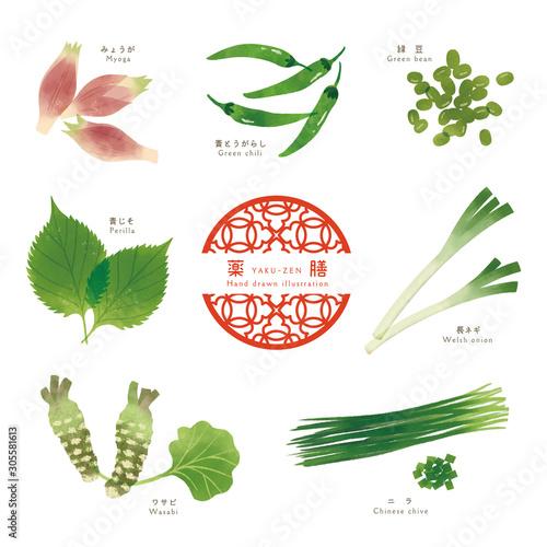 薬膳 / 漢方 / 食材イラスト