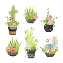 Set Of Flower Pots With Cacti And Succulents, Vector Illustration In Vintage Style.