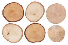 Round Cuts Of Saw Cuts Of Various Species Of Wood - Birch, Apple, Pear And Pine Isolated Set