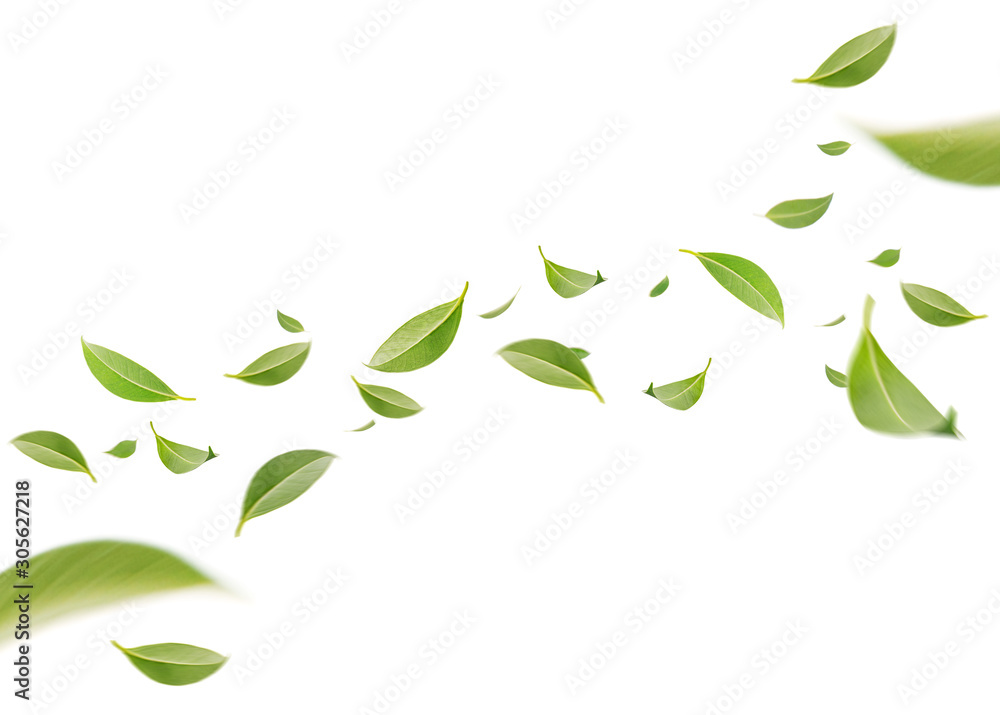 Fototapeta Flying whirl green leaves in the air, Healthy products by organic natural ingredients concept, Empty space in studio shot isolated on white background long banner