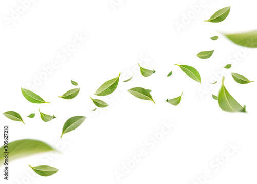 Flying whirl green leaves in the air, Healthy products by organic natural ingredients concept, Empty space in studio shot isolated on white background long banner
