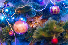 Cat On Christmas Tree. Naughty...