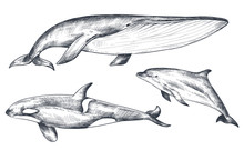 Vector Collection Of Hand Drawn Ocean And Sea Animals In Sketch Style Isolated On White