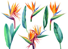 Set Tropical Bright Flowers An...