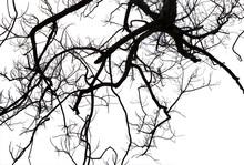 Dead Branches , Silhouette Dea...