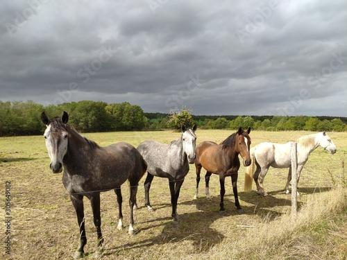 Photo chevaux avant l'orage