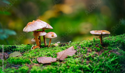 mushroom in forest Tablou Canvas