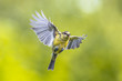 Bird in flight on bright green background