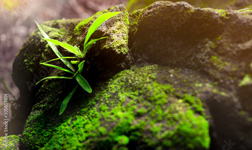 Closeup fresh green grass on stone with green mosses in rain forest Canvas Print