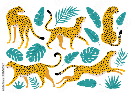 Fotografía Vector set of leopards and tropical leaves. Trendy illustration.