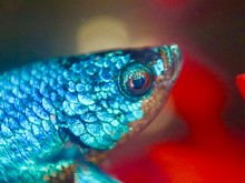 Colourful Fish In An Aquarium
