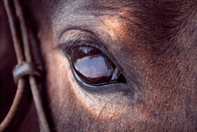 Brown Horse Eye Close-up With ...
