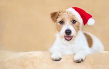 Christmas Holiday Smiling Happ...