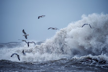 Huge Waves Raging In The Sea And Seagulls In The Spray Of Waves. Storm At Sea. Black Sea. Odessa.