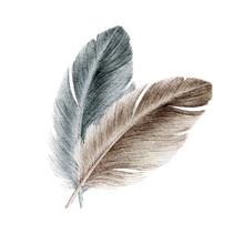 Bird Grey And Brown Feather Watercolor Realistic Illustration. Duck Or Goose Soft Natural Down Image. Fluffy Smooth Couple Of Quills Image Isolated On White Background.