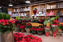 Beautiful Flowers-garden Shop Full Of Winter Seasonal Flowers, Plants And Christmas Decorations-gifts For The Stylish Interior Design.