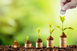 Leinwanddruck Bild Plant glowing on coins stacking on soil and greenery background.Dividend of Banking Deposit and stock investment concept.