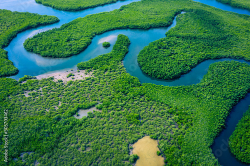 Fototapeta Gambia Mangroves. Aerial view of mangrove forest in Gambia. Photo made by drone from above. Africa Natural Landscape. obraz
