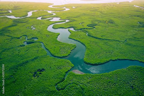 Obraz na plátně Gambia Mangroves