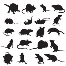 Set Of Mouse Animal.mouse Silh...