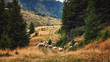 Shepherd and flock of sheep domestic agriculture animals. Beautiful rural scenery, forrest landscape. Livestock farming.