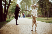 Woman Walking A Poodle Dog In The Autumn In The Park. The Dog Pulls A Leash With The Mistress. Autumn Landscape.