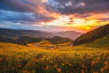 Panorama Of Tung Bua Tong Fore...