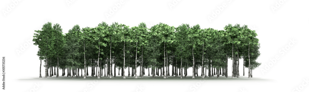 Fototapeta Green trees isolated on white background Forest and foliage in summer 3d render