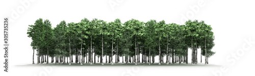 Obraz Green trees isolated on white background Forest and foliage in summer 3d render - fototapety do salonu