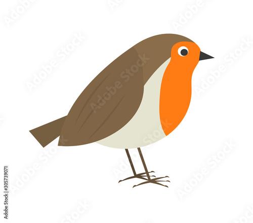 Cute robin bird. Canvas Print