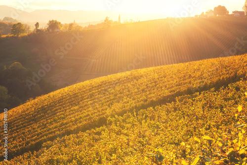 Montage in der Fensternische Honig Beautiful vineyard hills in sunset light, Maribor wine region, Slovenia, Styria. Scenic autumn landscape, agricultural background and popular tourist attraction