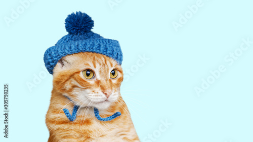 Closeup portrait of funny red cat in a blue knitted hat with a pompom isolated on light cyan. Copyspace. - 305750235