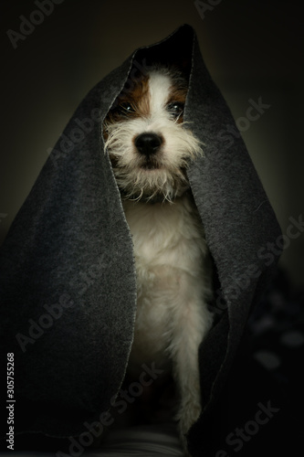 Photo Jedi themed Parson Russell Terrier Portrait