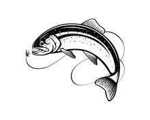 Rainbow Trout Jumping Out Water.Salmon Isolated On White Background. Concept Art For Horoscope, Tattoo Or Colouring Book.