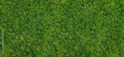 Obraz forest view from above - fototapety do salonu