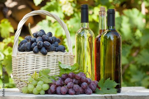 Obraz na plátně  Various grapes and white wine